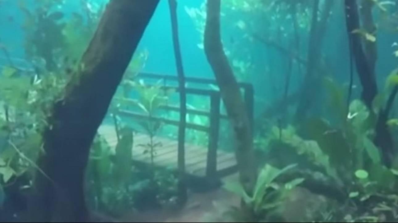 Ένα μοναδικό υποθαλάσσιο... δάσος στη Βραζιλία
