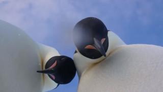 Όταν οι πιγκουίνοι ανακαλύπτουν την τεχνολογία