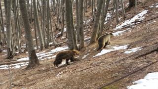 Ξύπνησαν οι αρκούδες στο καταφύγιο στο Νυμφαίο