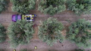 Πρόγραμμα Νέων Αγροτών: Ξεκίνησε η υποβολή αιτήσεων