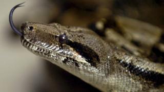 Φίδι με… δύο κεφάλια και δύο καρδιές βρέθηκε στη Φλόριντα