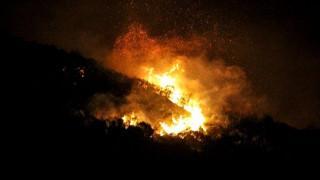 Συνολικά 130 δασικές πυρκαγιές το τελευταίο 24ωρο - Έκκληση από την Πυροσβεστική