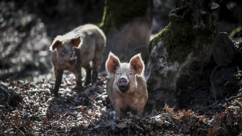 Πορεία διαμαρτυρίας κατά της κακοποίησης των ζώων στη Θεσσαλονίκη