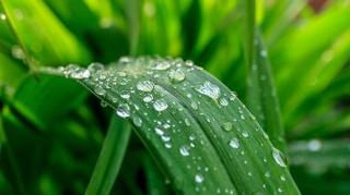 Πώς μπορούμε να ενισχύσουμε την περιβαλλοντική συνείδηση και ευαισθητοποίηση