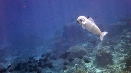 SoFi: Το ρεαλιστικό ρομποτικό ψαράκι προκαλεί το ενδιαφέρον του βυθού