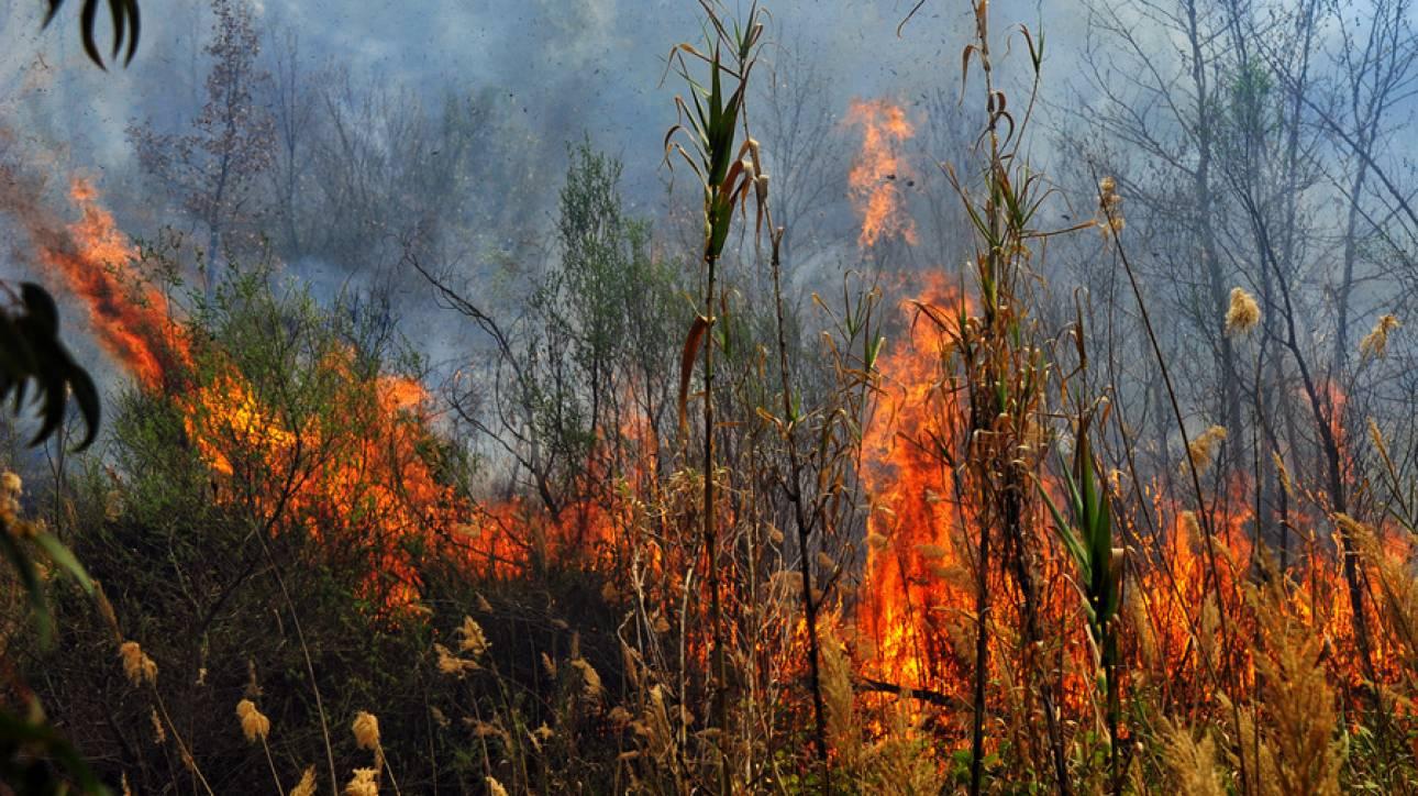 Πύρινος εφιάλτης στα Χανιά: Σε απόσταση αναπνοής από σπίτια οι φλόγες