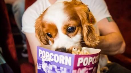 Isle of Dogs: τα σινεφίλ σκυλιά καλεσμένα στην πρεμιέρα της ταινίας στο Λονδίνο