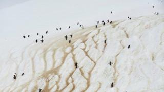 Ταξίδι στην Ανταρκτική: Φώκιες, πιγκουίνοι και παγωμένη, εκθαμβωτική φύση
