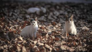 Αποσύρεται μέχρι νεωτέρας το νομοσχέδιο για τα ζώα συντροφιάς