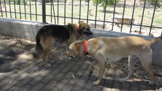 Ικανοποιημένες οι φιλοζωικές από την απόσυρση του νομοσχεδίου για τα ζώα συντροφιάς