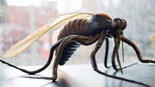 Εφαρμογή στο κινητό ειδοποιεί όταν…πλησιάζει κουνούπι