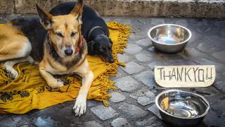 Dogs' Voice: Οι δήμοι μπαίνουν σε πρόγραμμα για μία Ελλάδα χωρίς αδέσποτα
