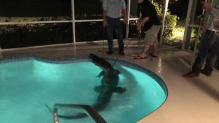 «Εισβολή» αλιγάτορα σε σπίτι της Φλόριντα