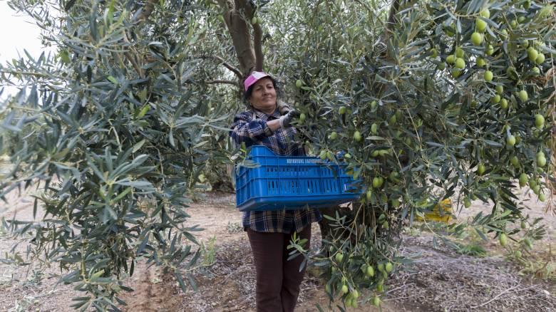 «Τριπλό χαράτσι» για συνταξιούχους με αγροτικό εισόδημα