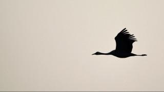 Καμπότζη: Χιλιάδες σπάνια πουλιά γεννήθηκαν με ασφάλεια