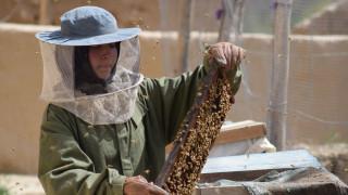 Πώς οι μέλισσες βοήθησαν μια Αφγανή μαθήτρια να γίνει επιχειρηματίας