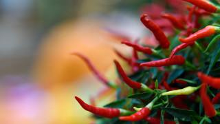 «Χάρος της Καρολίνα»: η καυτερή πιπεριά που έστειλε νεαρό Αμερικανό στο νοσοκομείο