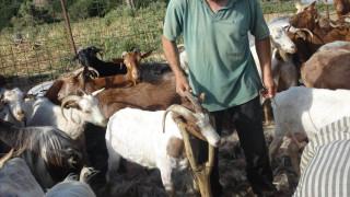 Αύξηση της ενίσχυσης κτηνοτρόφων στα μικρά νησιά