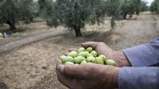 Νέοι Αγρότες: Έως πότε μπορείτε να υποβάλετε αίτηση για τη 2η πρόσκληση