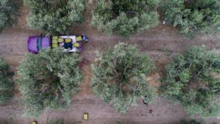 Νέοι Αγρότες: Έως 16 Απριλίου οι αιτήσεις για ένταξη στη 2η πρόσκληση