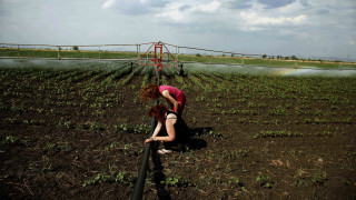 Έρευνα της ΓΓΕ για τις αγρότισσες με ενδιαφέροντα συμπεράσματα