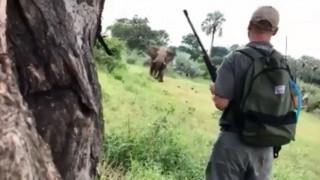Θαρραλέος ξεναγός σώζει ζευγάρι από επίθεση ελέφαντα με μία... κίνηση (vid)