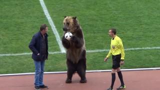 Σάλος στη Ρωσία με την αρκούδα σε ρόλο «οργανωτή κερκίδας» - Τι λέει η FIFA