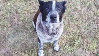 Μαξ: Ο σκύλος-ήρωας που έσωσε τρίχρονο κοριτσάκι