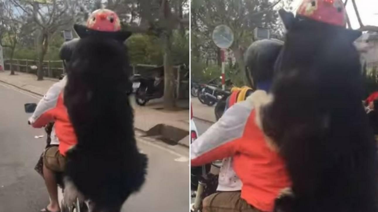 Απίστευτη εικόνα στο Βιετνάμ: Τεράστιος σκύλος κάνει... βόλτα με μηχανή