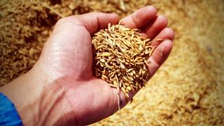Κίνα: Ανακάλυψαν νανοϋλικό που βελτιώνει την ποιότητα του ρυζιού