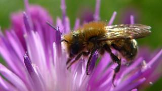 Άργος: Νεκρός από τσίμπημα μέλισσας 60χρονος