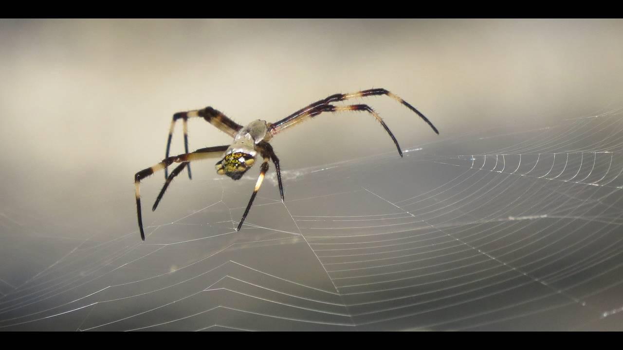 https://cdn.cnngreece.gr/media/news/2018/04/30/127957/photos/snapshot/spider-3072871_1920.jpg