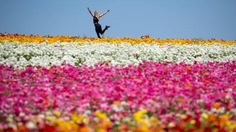 Ένας παράδεισος λουλουδιών στην Καλιφόρνια