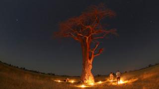 Σαφάρι για έρωτα: το ρομάντζο των Χάρι και Μαρκλ «άνθισε» στη Μποτσουάνα