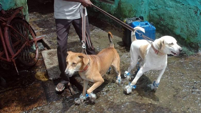 Ινδία: Χωρικοί σκότωσαν 13 σκυλιά για να εκδικηθούν για τους θανάτους παιδιών