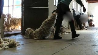 Μετά τη γούνα: η μόδα γυρνάει την πλάτη στο μοχέρ για την ευημερία των ζώων