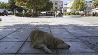 Πυροβόλησαν σκύλο στην Πτολεμαϊδα - Εξοργισμένοι οι κάτοικοι