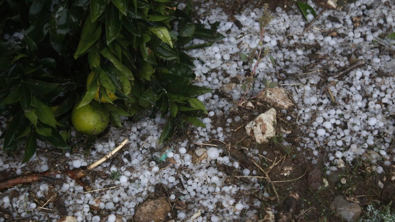 Ζημιές στις καλλιέργειες από ισχυρή χαλαζόπτωση σε Τρίκαλα και Καρδίτσα