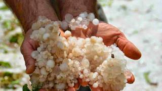 Σε απόγνωση οι παραγωγοί λόγω των ζημιών από χαλάζι σε Τρίκαλα-Καρδίτσα