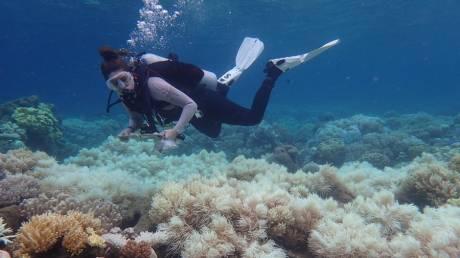 Αγώνας δρόμου για την προστασία του Μεγάλου Κοραλλιογενούς Υφάλου