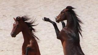 Σχεδόν 200 άγρια άλογα βρέθηκαν νεκρά στην έρημο της Αριζόνα