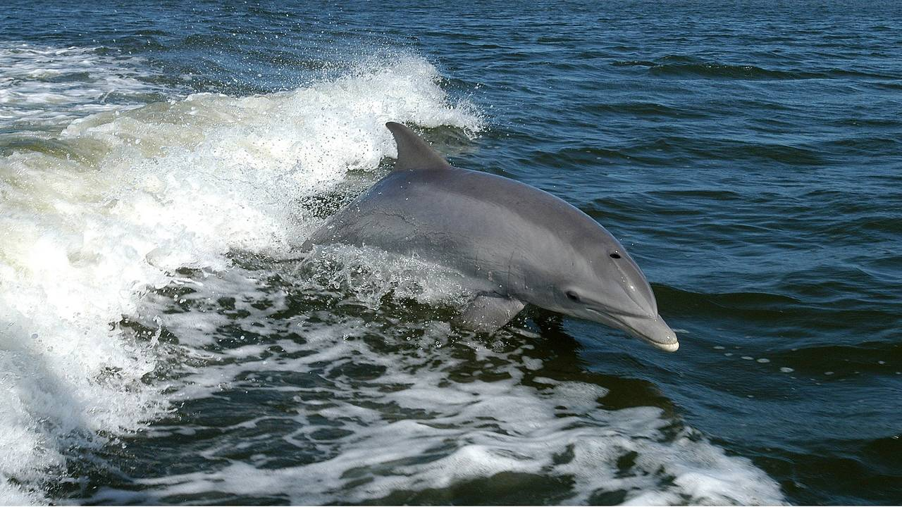 https://cdn.cnngreece.gr/media/news/2018/05/08/129098/photos/snapshot/dolphin-1167996_1920.jpg