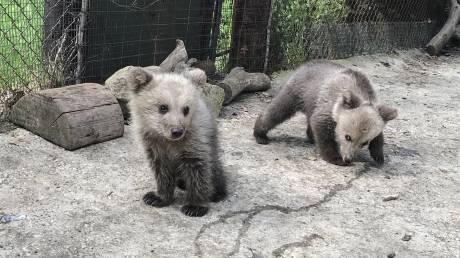 Και δεύτερο ορφανό αρκουδάκι βρήκε στέγη στον Αρκτούρο