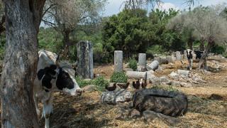 Στο «σφυρί» αρχαία ελληνική πόλη στα τουρκικά παράλια