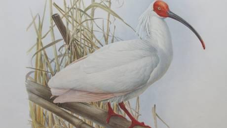Το πουλί της διπλωματίας: πώς η Κίνα έσωσε την Ιαπωνία με λίγα λευκά φτερά