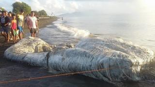 Ταραχή στις Φιλιππίνες: Ένα «μαλλιαρό» πλάσμα ξεβράστηκε σε ακτή