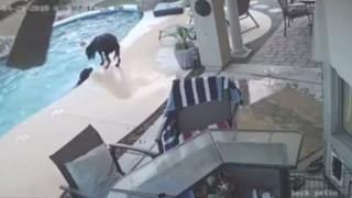 Σκύλος-ήρωας σώζει τον τετράποδο φίλο του από πνιγμό