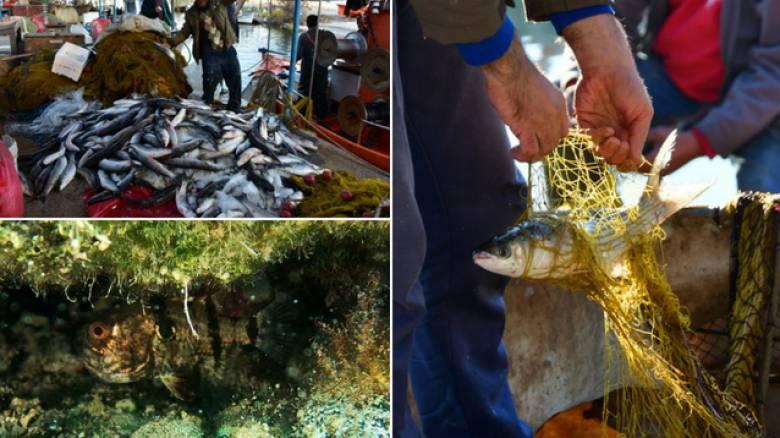 Εισβολή ξένων ειδών στα ελληνικά θαλάσσια νερά - Πόσο επικίνδυνο είναι το φαινόμενο;