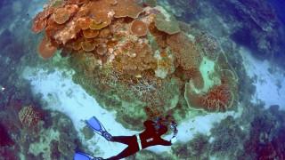 Ένας κήπος από κοράλλια στα βάθη του Κόλπου του Μεξικού