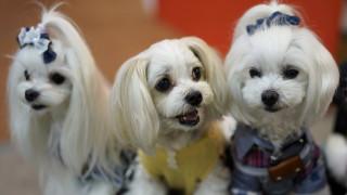 Γρύλοι, σκύλοι,σκαθάρια: Τα δημοφιλέστερα κατοικίδια ανά τον κόσμο